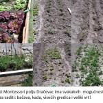 u Montessori plju Dračevac ima svakakvih ogućnosti za saditi i bačva, i kada i visećih gredica i puno veliki vrt